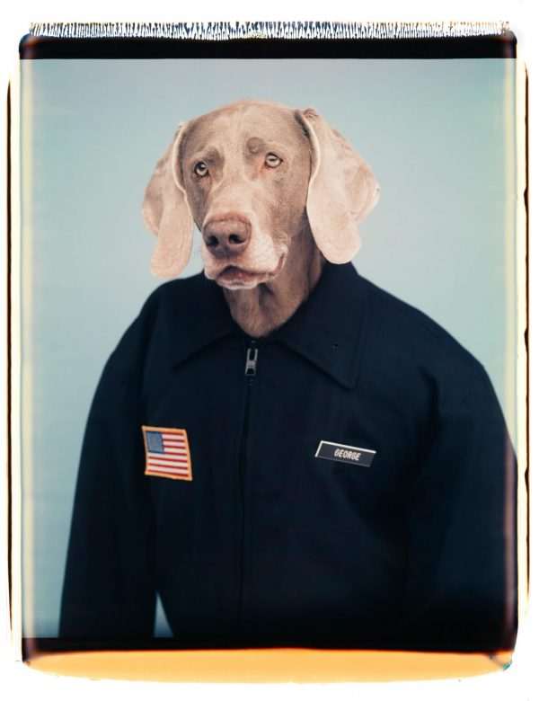 Being Human: William Wegman [Melbourne]